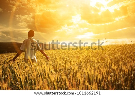 Man walking in wheat during sunset and touching harvest