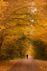 Man walking on natural path. Young man walking in autumn park. Road in the evening in autumn sunset. One man on his way in autumn forest.