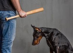man with a baseball bat punishes a dog.
