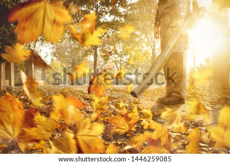 Man with a leaf blower is removing fallen leaves from the sidewalk Stock photo ©