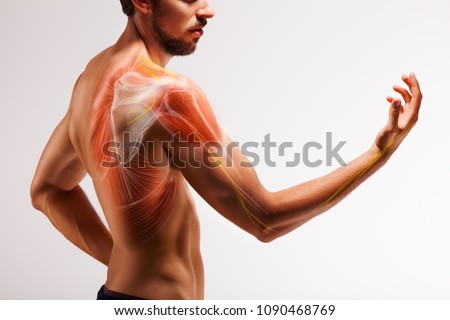 Man with extended arm. Illustrated representation of the tendon, scapula and nerves of the human arm. Foto stock ©