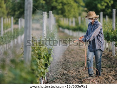 Man with hat or vintner spraying pesticides on vineyard. Working at farm in agriculture or horticulture. Vine or Wine production concept. Foto stock ©