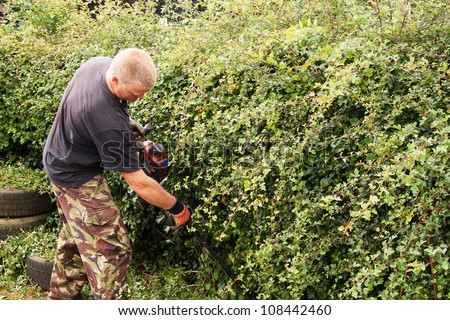 Man with mechanical cutter, trimming hawthorn hedge