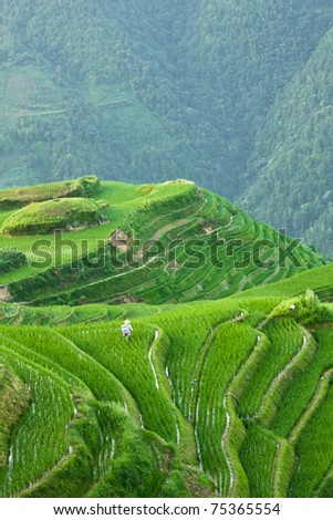 Man working in a rice field magnificent views