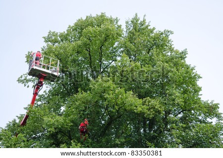 Man working in an elevating platform truck beside a tree
