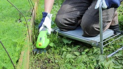 Man works in vegetable garden while kneeling on garden chair and trims path next to garden bed compact electric grass trimmer