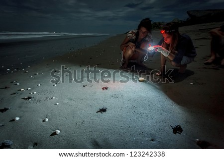 MANAGUA, NICARAGUA - NOVEMBER 26, 2012: Illuminated hatchlings scurrying to the water during annual Olive ridley sea turtle release on beach on November 26,2012 in Managua,Nicaragua.