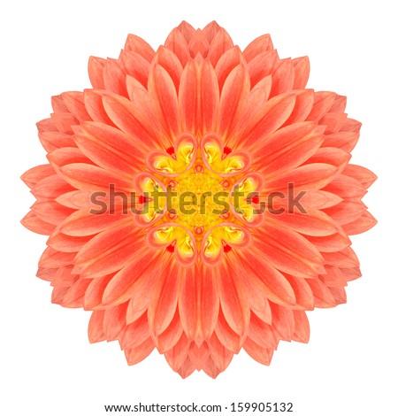 Mandala Gerbera Flower Kaleidoscope Isolated on White Background