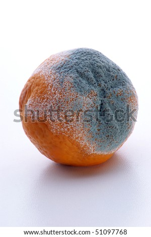 mandarin mouldy organic fruit unhealthy to eat