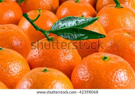 Mandarines for background - stock photo