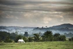 Mangalarga Marchador horse in Brazil in a peaceful landscape