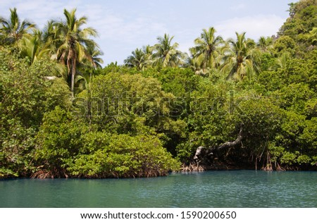 Mangrove and Palm trees at edge of Linderalique Lagoon near Hienghene, New Caledonia, Overseas Territory of France