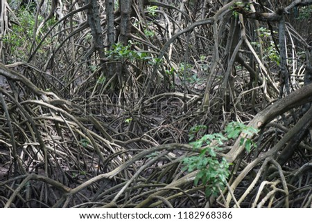 Mangrove Conservation and Conservation  #1182968386