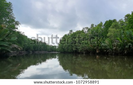 Mangrove forest along the river, beautiful nature view.
