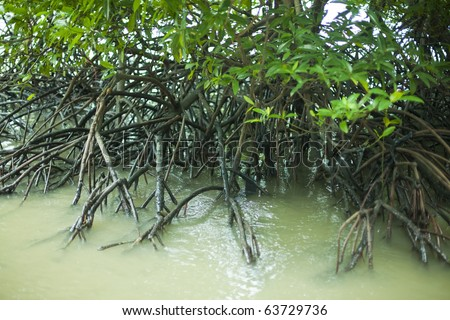 mangrove forest and roots in water - Thailand