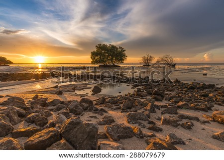 Mangrove forest during sunrise. Beautiful natural seascape
