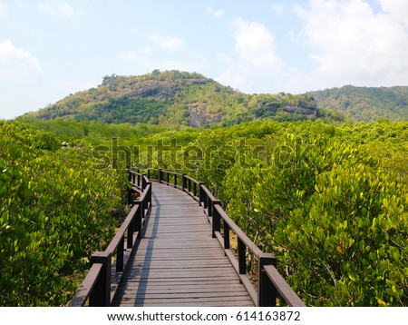 mangrove forest   pranburi...