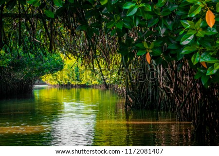 mangrove forest reflection in lake, submerged mangrove forest, mangrove forest, Pichavaram, Chidambaram, India