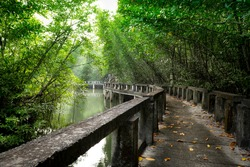 Mangrove forest with Cement bridge Walk way at Koh Chang Island,Thailand