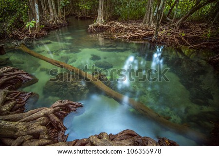 Mangrove forests with Pond