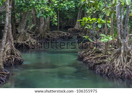 Mangrove forests with river