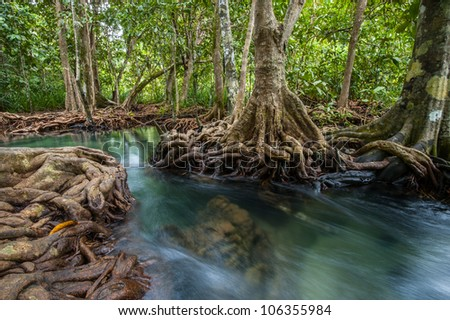 Mangrove forests with river and green tree