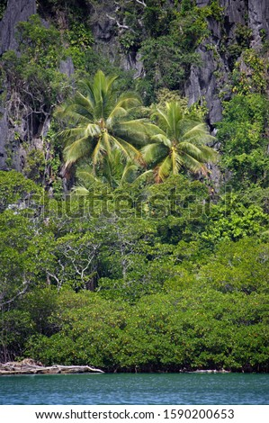 Mangrove, Palm tree and Scarp at edge of Linderalique Lagoon near Hienghene, New Caledonia, Overseas Territory of France