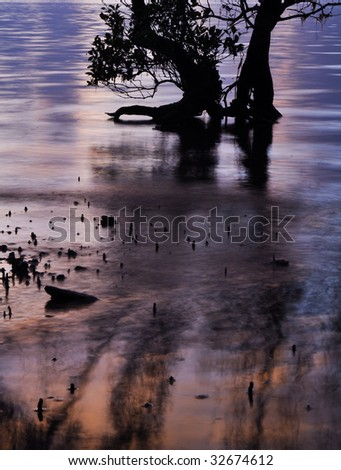 Mangrove roots at sunrise