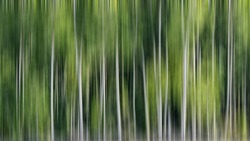 Mangrove tree abstract as background