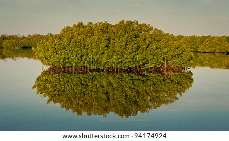 "Mangrove tree reflected in the water at the J.N. ""Ding"" Darling National Wildlife Refuge in Sanibel Island, Florida"