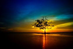 Mangrove tree stands lonely during sunset