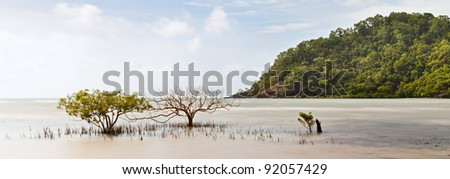 mangrove trees in tropical sea of daintree rainforest queensland Australia, hill with exotic pristine rain forest, long exposure panorama landscape paradise island