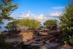 Mangrove trees on the coast of Tanjung Setumu in Dompak, Tanjung Pinang, Riau Islands, Indonesia