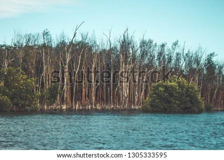 Mangrove Vegetation in Brazil #1305333595