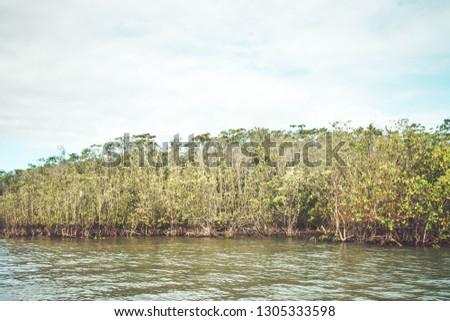 Mangrove Vegetation in Brazil #1305333598