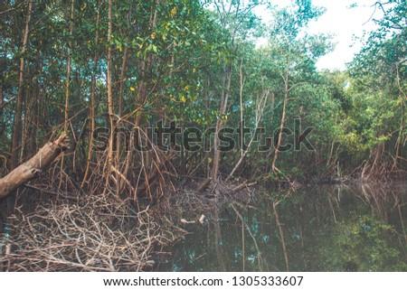 Mangrove Vegetation in Brazil #1305333607