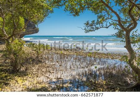 mangroves forest at Lamanok Island of Anda at Bohol island Philippines