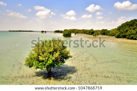 Mangroves in Qatar - Al Khor, Qatar