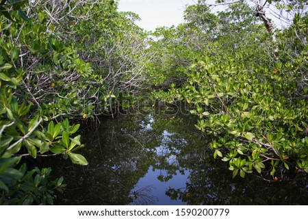 Mangroves over water, Key West, Florida, United States