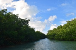Mangroves within the Florida Keys, Key Largo.