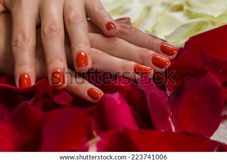Manicure - Beautiful manicured woman\'s hands with red nail polish on rose petals.Beautiful hands with a nice manicure. Gel nails are covered with red polish. Spa treatment for hands.