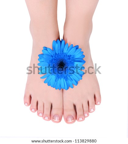manicured feet and blue gerber flower isolated on white