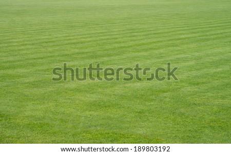 manicured lawn on a football field / football field