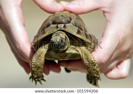 Mans hands holds a turtle.