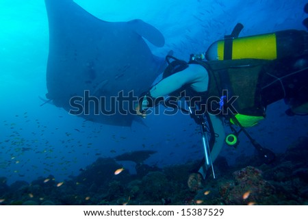 Manta and divers, Ari-Atoll. Maldives