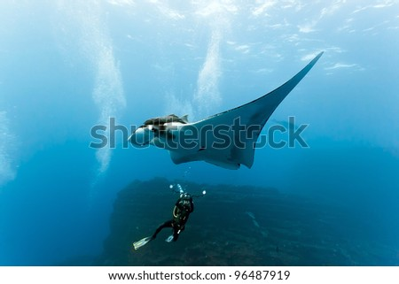 Manta and photographer on the reef - stock photo