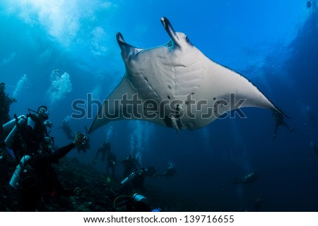 Manta ray over diver in maldives