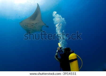 Manta ray with diver, underwaterphotographer