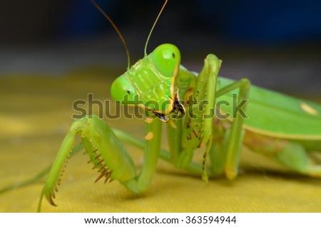 Mantis with various performances