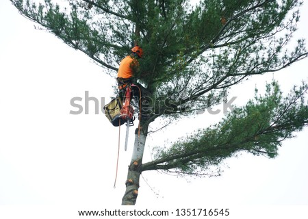 manual worker hanging by crane to the tree top for tree removal